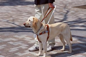 cane guida non vedenti 300x200 - Cane Guida : Blindsight Project e Aila offrono tutela legale contro le discriminazioni