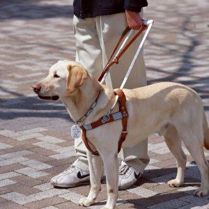 cane guida non vedenti 300x300 - cane-guida-non-vedenti