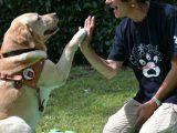 """scuola cane guida scandicci 160x120 - NADIR MALIZIA: """"VITA SU QUATTRO RUOTE"""" DI UN GIURISTA CON LA PASSIONE PER LA SCRITTURA"""