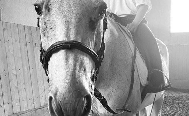 Equitazione paralimpica, a Ragusa il 2° Campionato regionale individuale